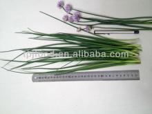Frozen Germany Chive with all certificates approved
