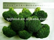 frozen broccoli florets (frozen broccoli florets)with FDA BRC,HALAL,KOSHER,HACCP