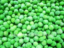 IQF   frozen   green   peas  with high quality  iqf   green   peas
