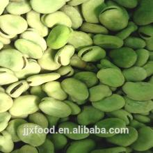 2014bulk wholesale frozen IQF broad beans
