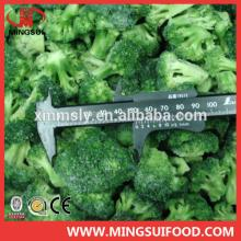 Hot sell frozen broccoli 3-5cm