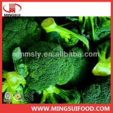 China wholesale new iqf frozen broccoli florets