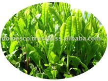 Green tea powder Vietnam