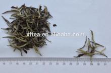 white tea bai hao yin zhen/white silver needle tea