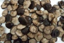 Chinese high quality canned shiitake mushroom 800g/tin