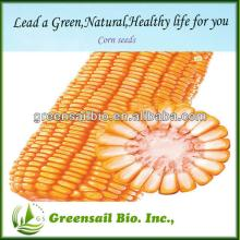 2014 Yellow corn seed sale