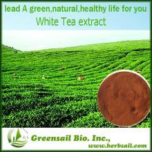 2013 100% Natual GMP certified white tea extract