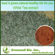 2013 OEM/ODM 100% Natural  Organic   White   Tea   Extract