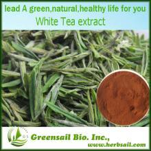 2013 Premium Organic White Tea Extract in Bulk Stock