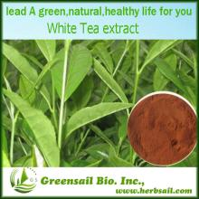 2013 High quality Organic White tea extract