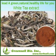 2013 Supply Pure White Tea Extract with Polyphenols