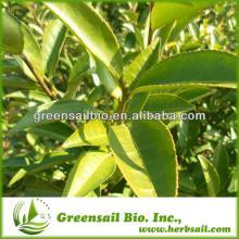 Organic White Tea Extract Powder ,Tea Polyphenols 10%-98%,