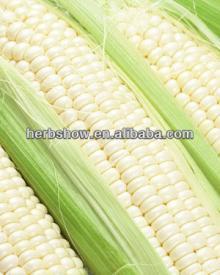 Seed corn/hybrid yellow corn seed/white corn seed