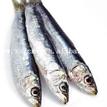 Fish seafood fishing suppliers from China canned sardines Thailand