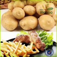 dutch   potato  certified fresh sweet  potato  100-200g exporter