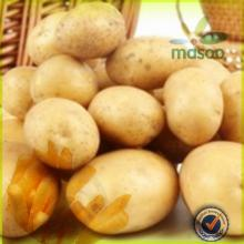 Sweet High Quality Fresh Potato with Low Price /  oven  roasted potatoes / potato wedges