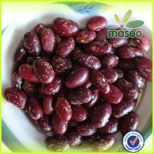 Purple Speckled Kidney Beans For Sale