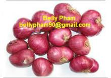 Red Onion: High Quality and Competitive Price