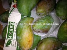 Fresh Mango Varieties (Sokkary- Zebediah- Sedik)