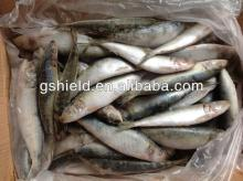 WR sardine fish frozen food 8-10pcs/kg for canned seafood