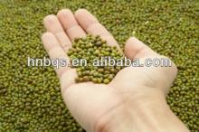 Top Quality Sprout  Green  Mung  Bean  /  Green   Bean   Price