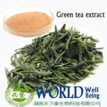 matcha green tea extract powder /organic green tea extract powder / 100% pure green tea extract