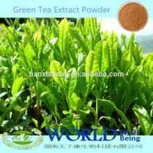100% Natural China Organic Zenergreen Super China Green Tea Extract Tea Polyphenols Powder/Green Tea