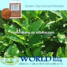 Factory 100% Natural Zenergreen Super China Green Tea Extract Powder/Green Tea Extract/Organic Green