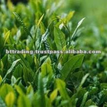 green tea from Vietnam