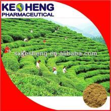 Organic   White   Tea   Extract ,Camellia sinensis O. Ktze.
