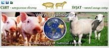 Natural casings SHEEP CASINGS HOG CASINGS
