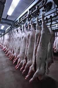 Frozen Pork Muscle/ Frozen Pork Liver/Frozen Pork lead leg/Frozen Pork lead feet/Frozen Pork kidney