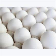 WHITE SHELL EGGS FROM INDIA