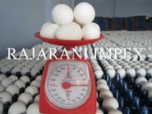 Indijski Dobavitelj Bele jajc v lupini