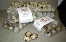 FERTILE QUAIL EGGS