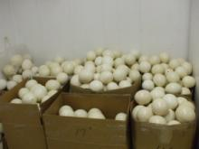 Ostrich eggs for sale at affordable price