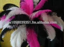 holiday and party decoration  ostrich   feather s