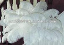 2014 white ostrich Feather