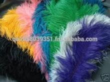 Colourful Ostrich Feather