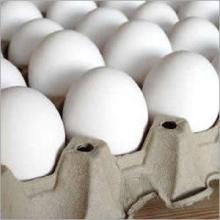 30.000 Fresh Ostrich eggs and chicks for exportation.Contact us on our website at(www.birdsbreed.web