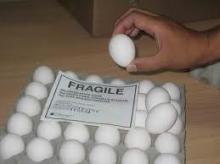 Farm Fresh White Shell Eggs