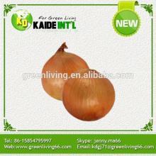 Special Fresh Yellow  Big   Onion
