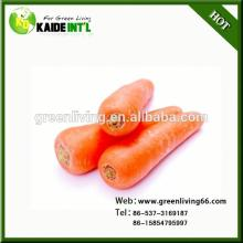 Special Red Carrot Fresh Carrot