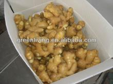 2012 fresh ginger top quality from china