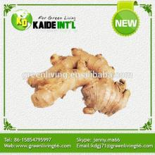 Fresh Ginger Picked From  Farm  Product