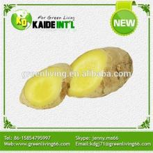 Ginger Product Manufacturers