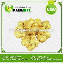 Good Quality Yong Ginger In Our Own Farm