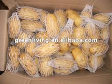 2012 fresh farm crop--Holland potato