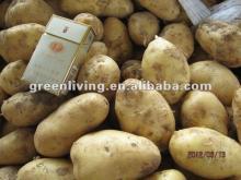 2012 cheap fresh Holland (russet) potato
