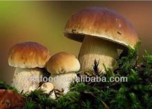 Dried,frozen,preserved Boletus mushroom